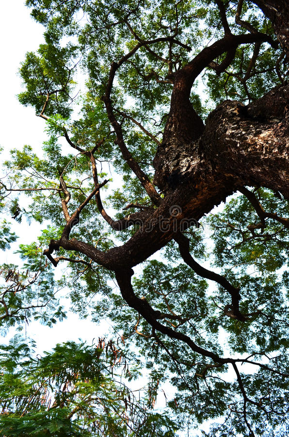 大树01 库存图片