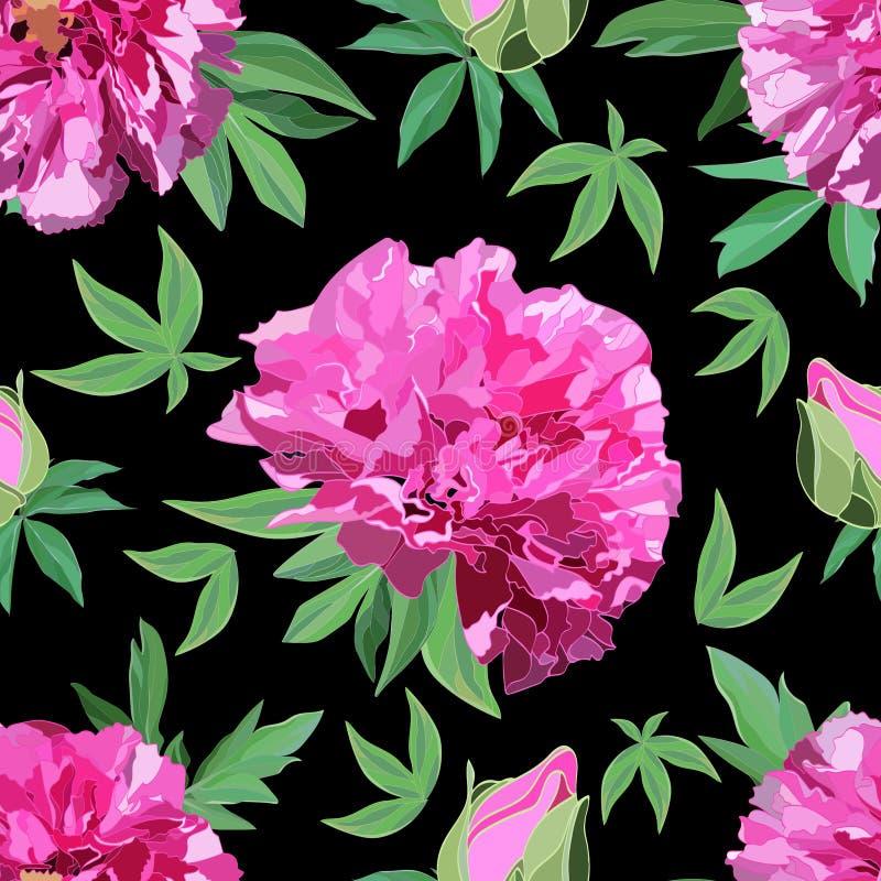 大桃红色牡丹的明亮的无缝的样式与叶子的在黑背景 皇族释放例证