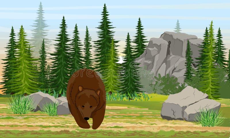 大棕熊在草甸 云杉的森林、石头和山,草 欧洲和美国的本质 熊属类arctos 向量例证