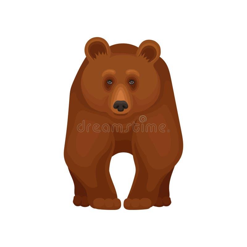 大森林熊站立在四个爪子的,正面图 大棕色北美灰熊 哺乳动物的动物漫画人物  平的传染媒介 库存例证
