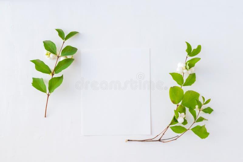 大模型白纸卡片和分支与绿色叶子 免版税图库摄影