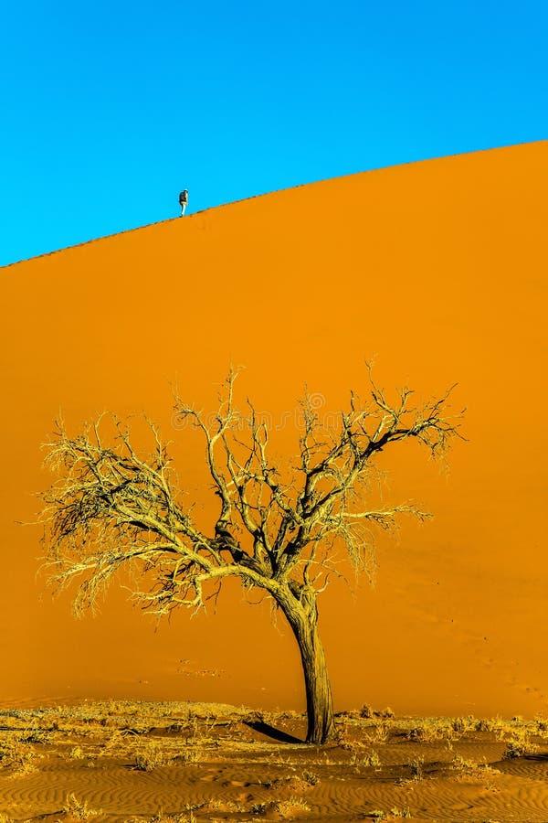 大橙黄沙丘 库存照片