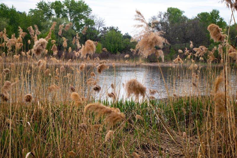 大池塘,在水的雨水滴 免版税库存图片
