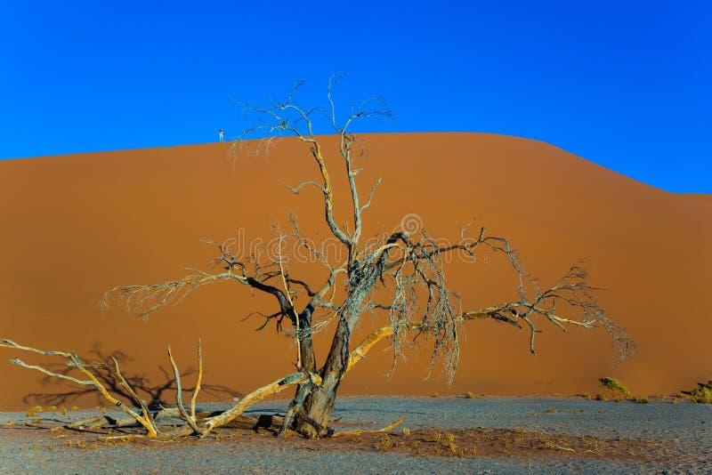 大沙丘和小树 库存照片