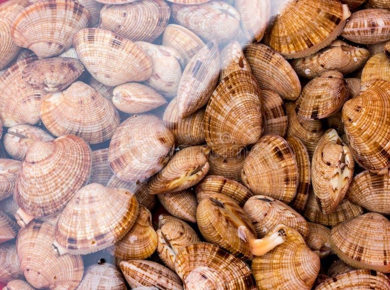 大活贝壳在水中 免版税库存图片