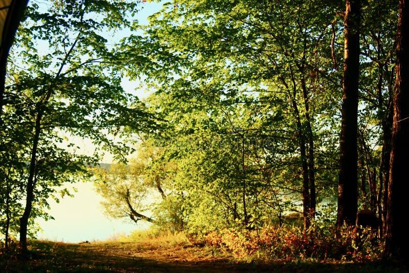大海在有杉木和桦树的一个森林湖 库存照片