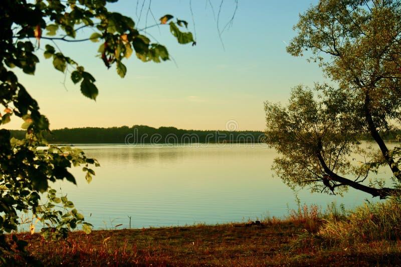 大海在有松树的一个森林湖 免版税库存照片