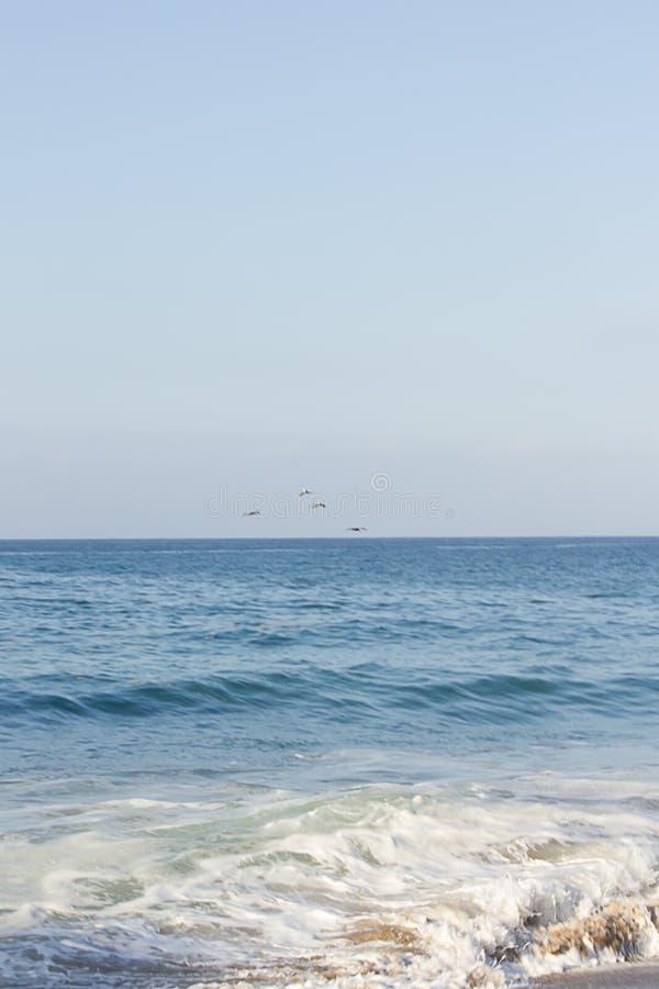 大海开放浩瀚突出了与鹈鹕飞行阳光群  免版税库存照片