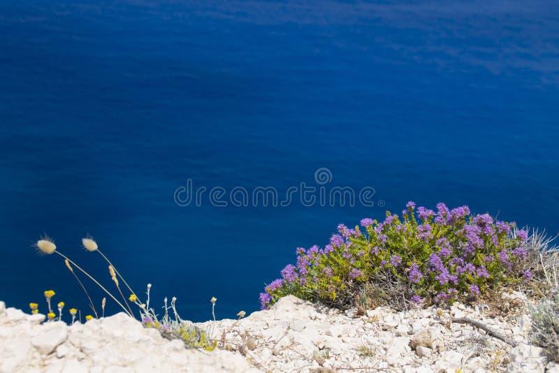 大海背景的地中海植物 免版税库存图片