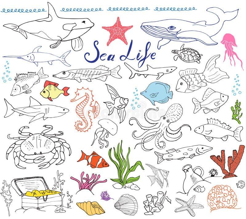 大海洋生活动物手拉的剪影集合 鱼,鲨鱼,章鱼,星,螃蟹,鲸鱼,乌龟,海象,贝壳andlet乱画  皇族释放例证