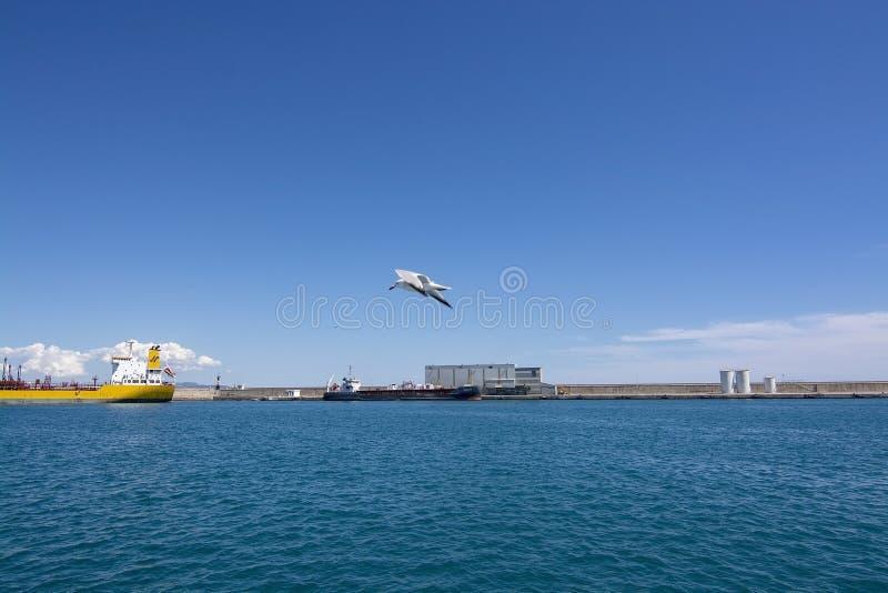 大游轮海洋绿洲号停泊了帕尔马港口 免版税图库摄影
