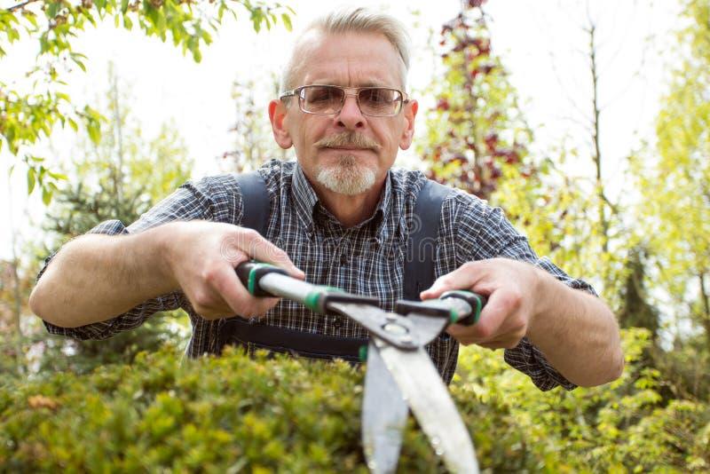大灌木剪的花匠裁减 免版税库存图片