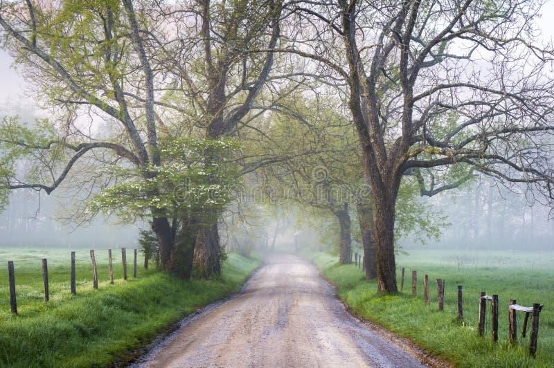 大烟山国家公园Cades小海湾有雾的乡下公路 免版税图库摄影