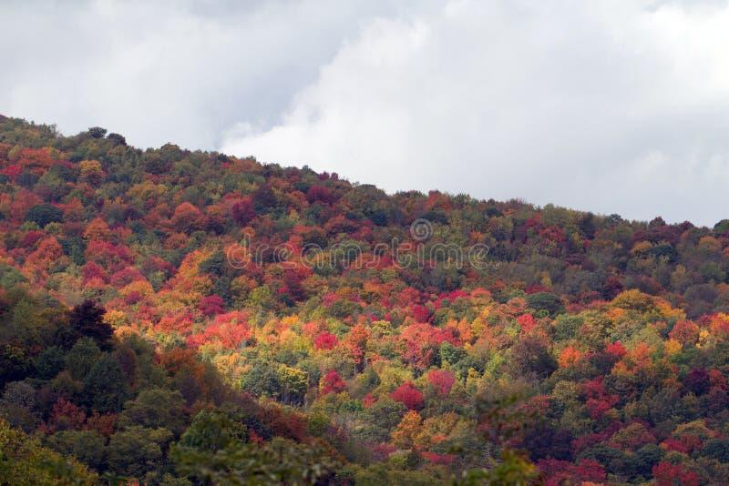 大烟雾弥漫的山脉国家公园 免版税图库摄影