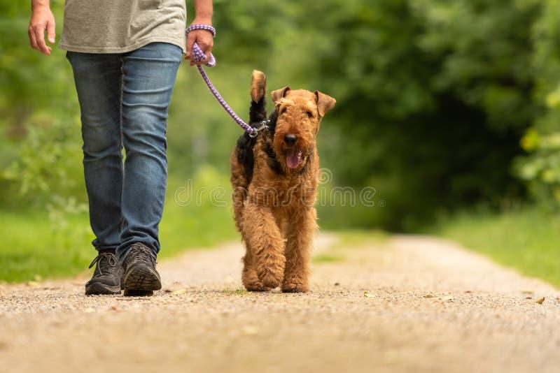 大狗狗 训犬者走与他在路的服从的狗在森林里 免版税库存图片