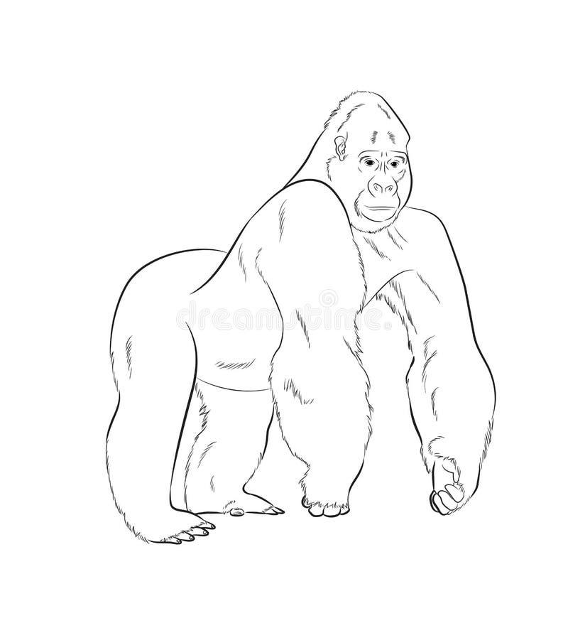 大猩猩图画传染媒介例证 向量例证