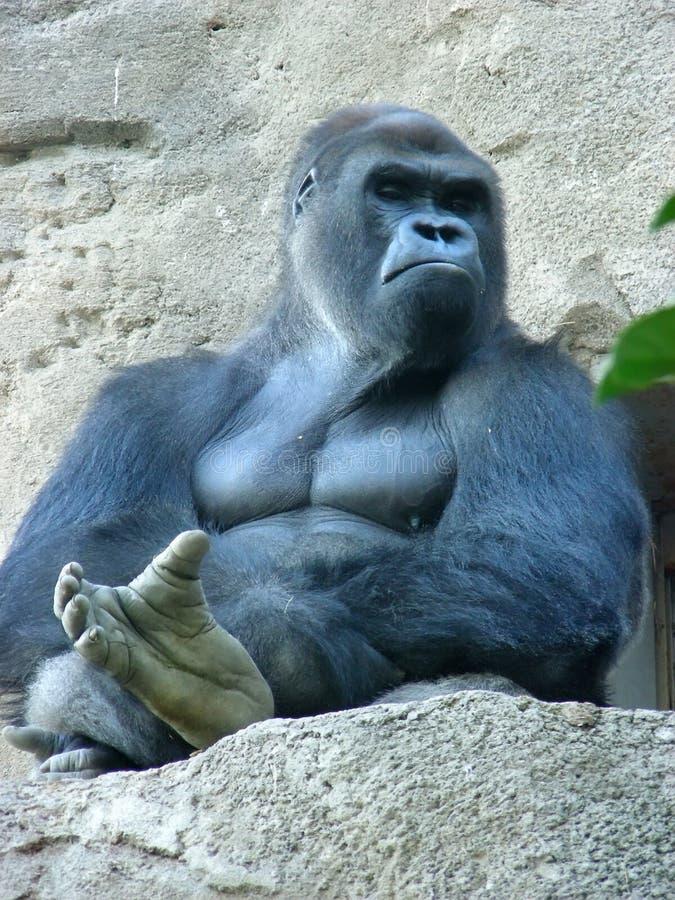 大猩猩男 免版税库存照片