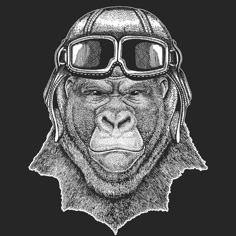 大猩猩,猴子佩带的飞行员帽子 为儿童衣裳,发球区域, T恤杉打印 试验野生动物 皇族释放例证