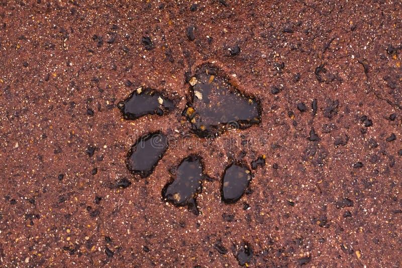大猫的脚印 免版税图库摄影