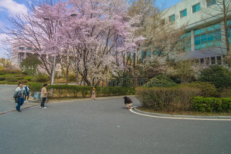 大田,韩国, April3, 2018年:Woosong大学生 库存照片
