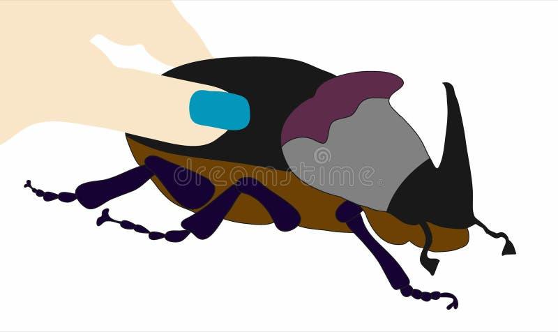 大甲虫 库存图片