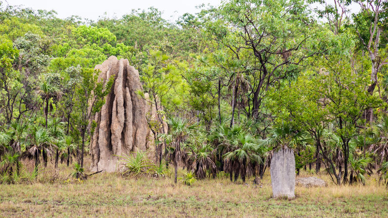 大白蚁土墩在Litchfield国家公园, NT,澳大利亚 库存图片