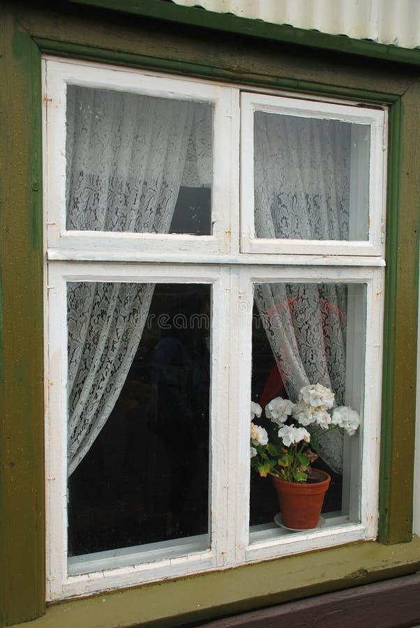大竺葵在窗口里 免版税库存照片