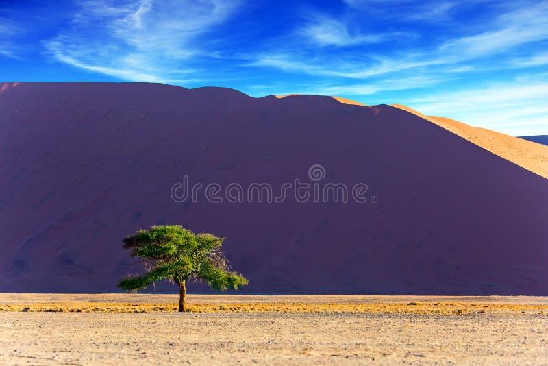 大紫罗兰色橙色沙丘 库存图片