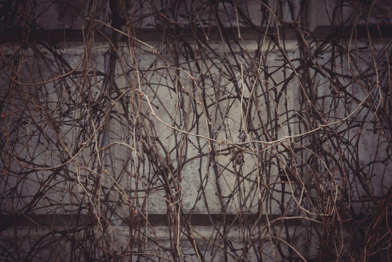 大红褐色的老破旧的砖墙正方形背景纹理 减速火箭的都市Brickwall框架墙纸 脏的织地不很细黏土砖 免版税库存图片
