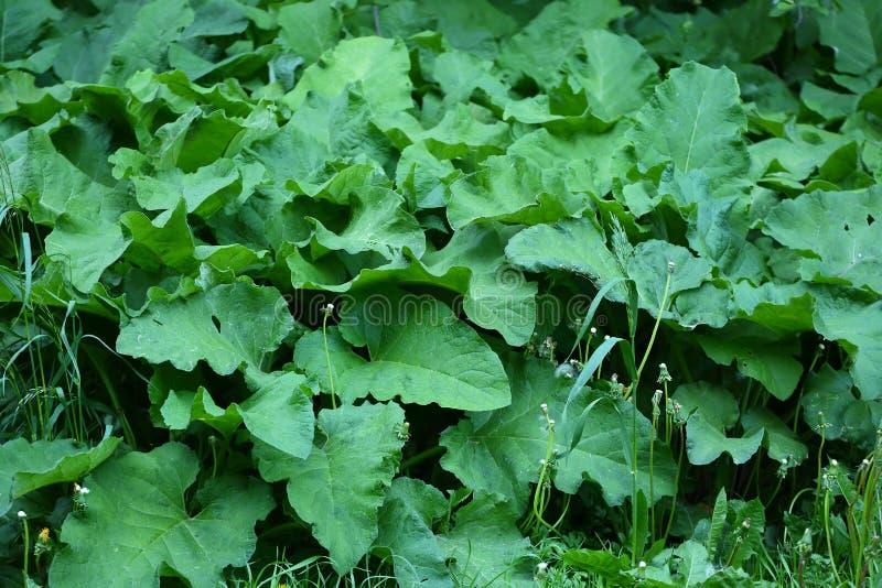 大绿色植物名丛林  免版税库存照片