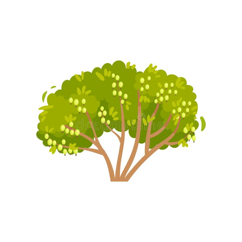 大绿色灌木用成熟鹅莓 灌木用可食的莓果 庭园花木 自然产品 平的传染媒介象 皇族释放例证