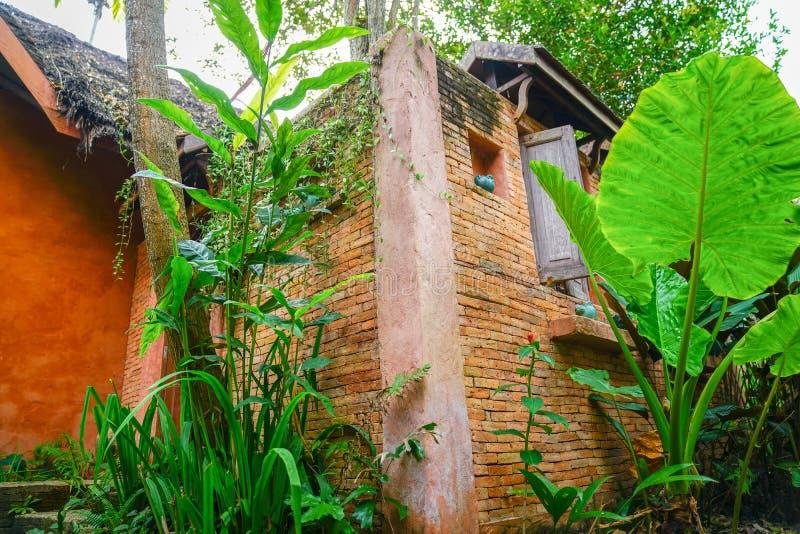 大绿色芋头在庭院离开与砖并且回报墙壁  库存照片