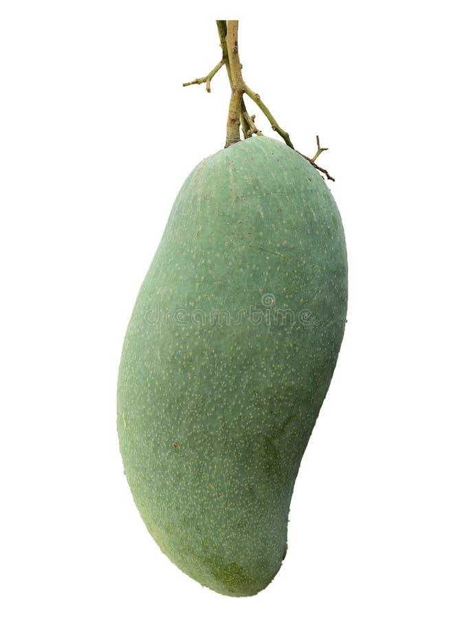 大绿色芒果 库存图片