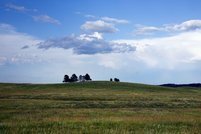 大网茅草和树在小山在Custer国家公园,南Da 免版税库存照片