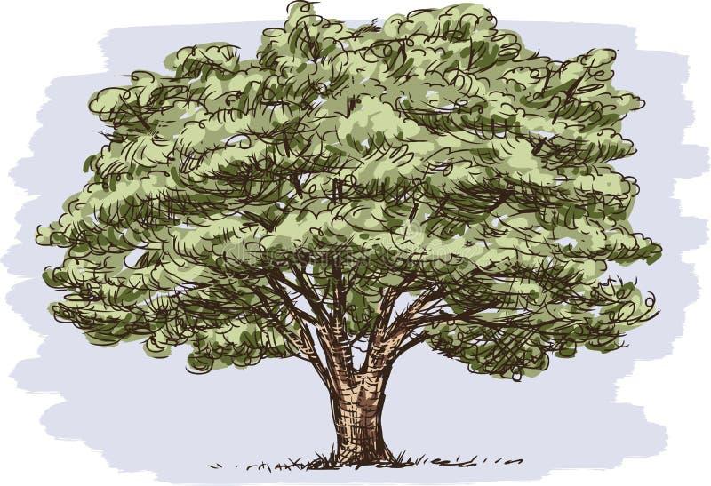 大老结构树 皇族释放例证