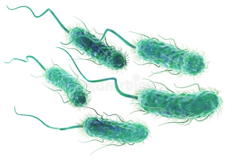 大肠埃希氏菌细菌E ?? 科学地准确3D例证 库存例证