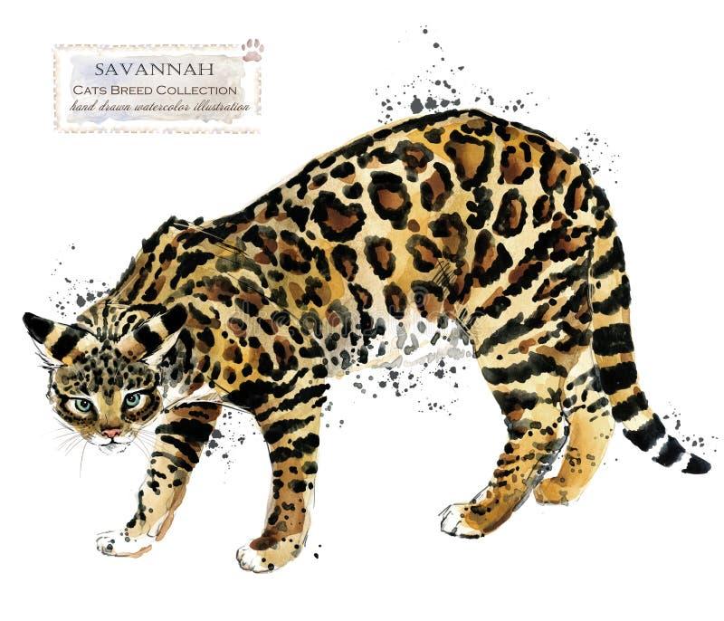 大草原猫水彩家宠物例证 猫助长系列 家畜 向量例证