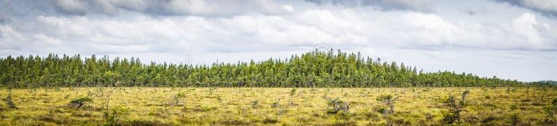 大草原的全景风景 免版税库存图片