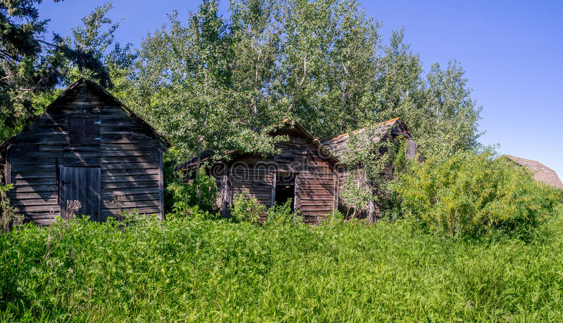 大草原的老农厂棚子 库存照片