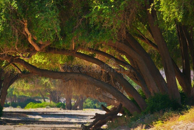 大草原风景在纳米比亚 库存照片