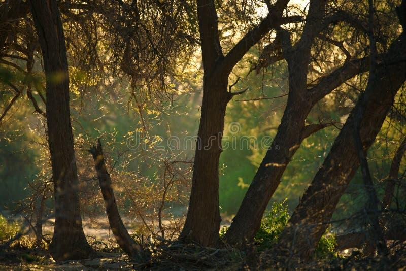 大草原风景在纳米比亚 免版税库存图片