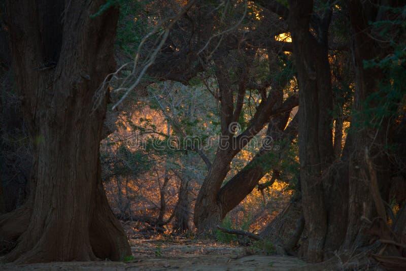 大草原风景在纳米比亚 图库摄影