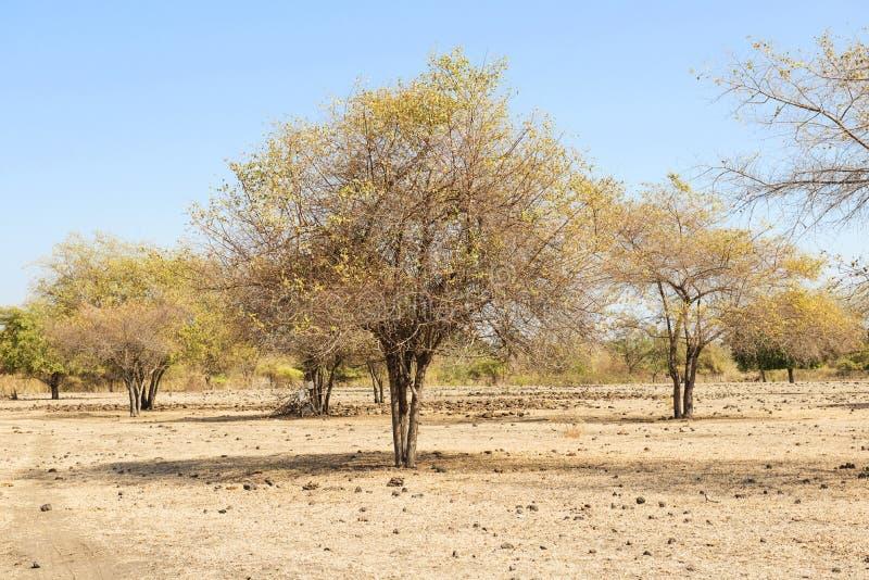 大草原风景在Doro Ncanga的 免版税库存图片