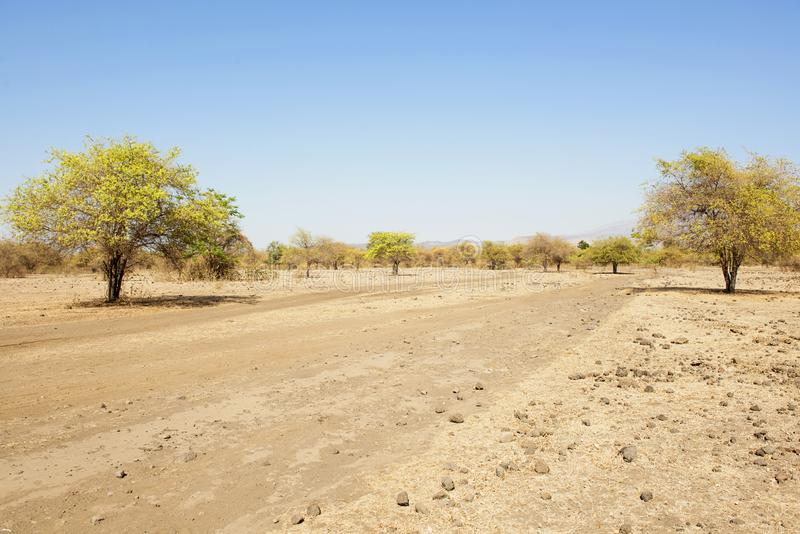 大草原风景视图在Doro Ncanga的 免版税库存图片