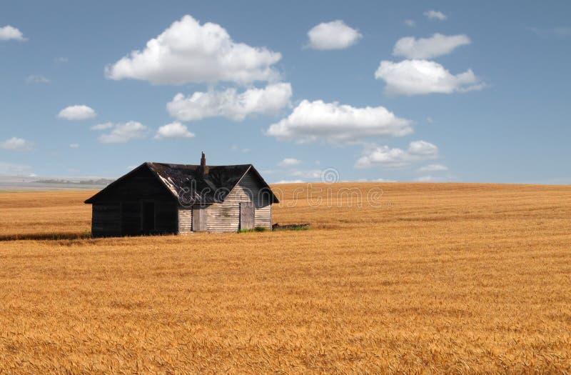 大草原麦田的被放弃的房子。 免版税库存照片