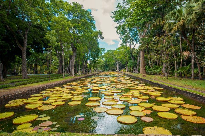 大荷花植物园Pamplemousses,毛里求斯 图库摄影