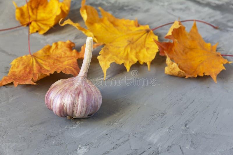 大蒜和黄色秋叶 免版税库存图片