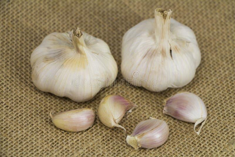 大蒜形式Oganic农场 库存图片
