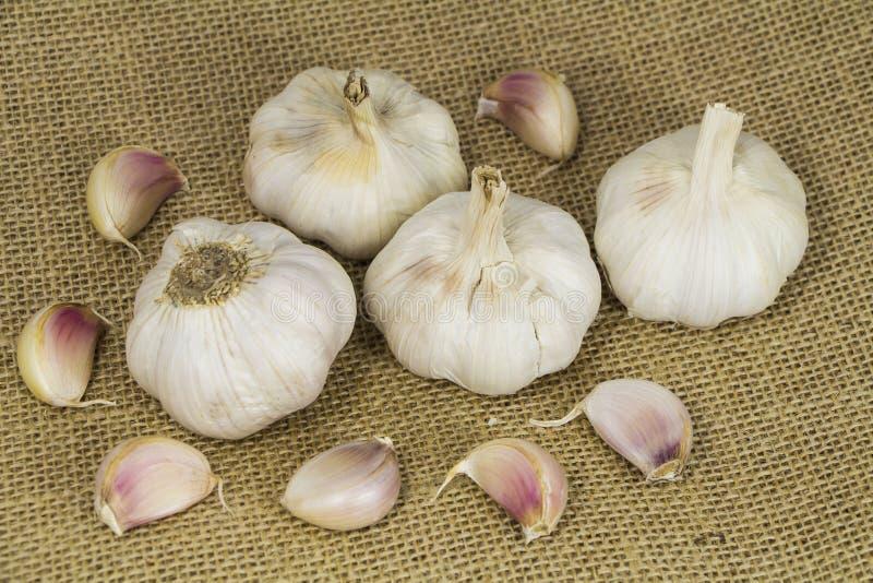 大蒜形式Oganic农场 免版税图库摄影