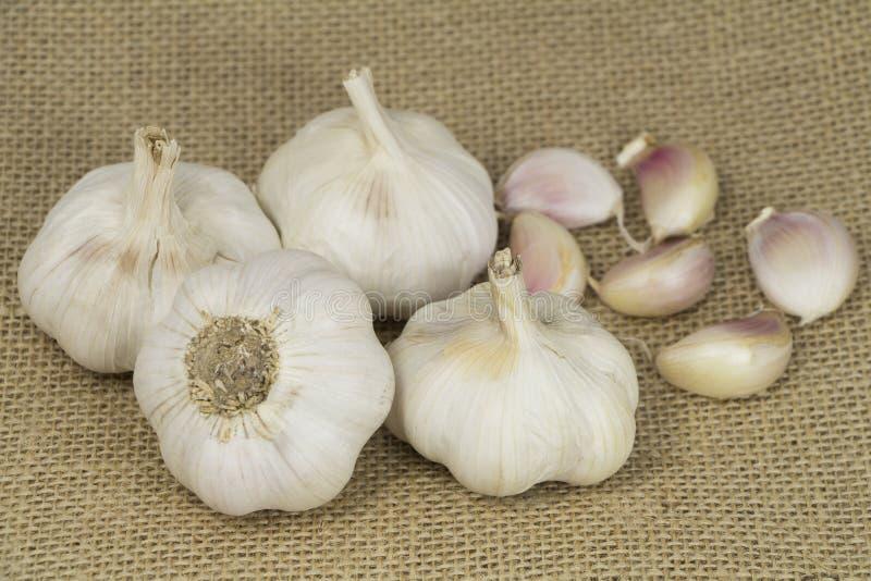 大蒜形式Oganic农场 免版税库存图片